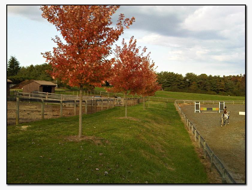farm_8