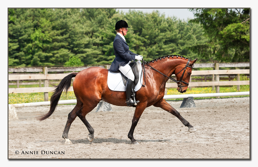 Dressage at Blue Goose